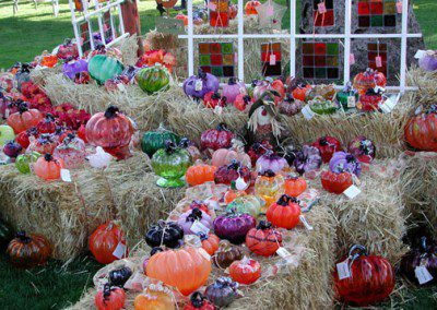 Pumpkins on display at the pumpkin patch